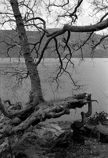 Tree, b&w-tree2.jpg