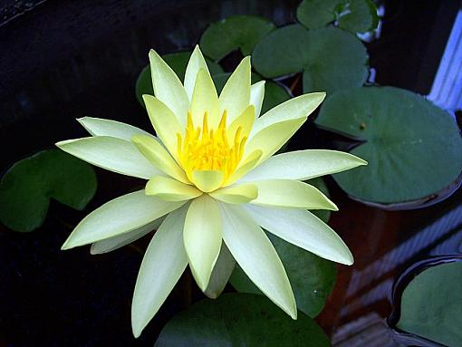 And a water lily?-100_1165.jpg