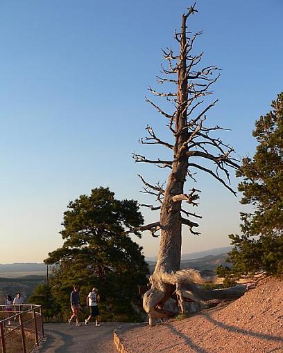 Bryce's Tree-03.jpg
