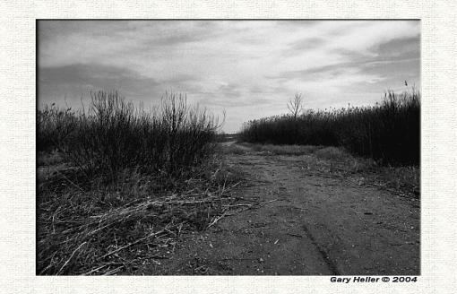 Trail to the bay. . .B&W-lndscp0404-2804xweb.jpg