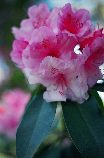 A garden view-flower-640.jpg