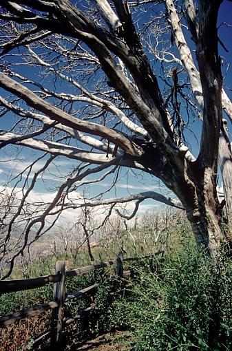 Evil Tree?-eviltree1_600.jpg