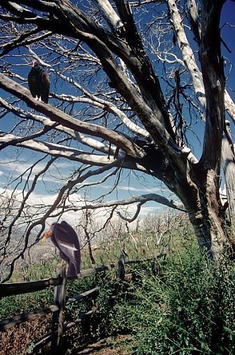 Evil Tree?-eviltree1_2_600.jpg