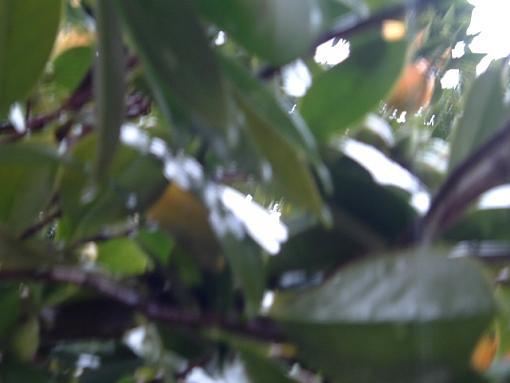 Rainy Day-2004_0216image0003.jpg