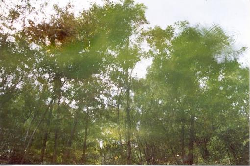 Buck Garden Reflection-08-02-buck-garden-reflection-2.jpg