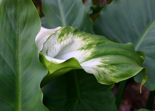 Lilly and Leaf-lilly-leaf.jpg