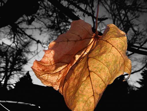 A leaf-leaf.jpg