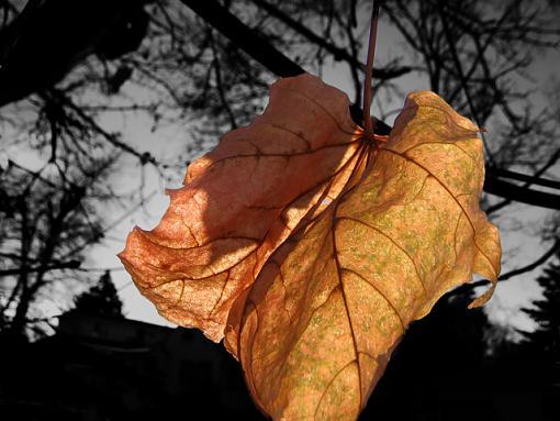 A leaf-leaf-2.jpg