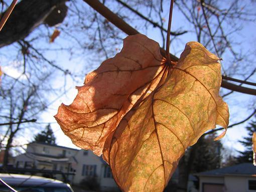 A leaf-original-leaf.jpg