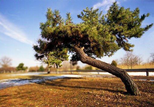 The running tree-lndscp0204-0202webx.jpg