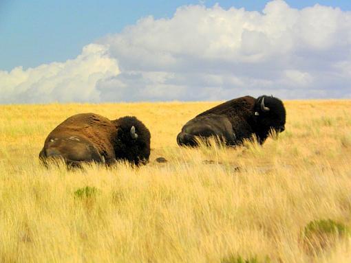 Buffalo-dscn4856-1.jpg