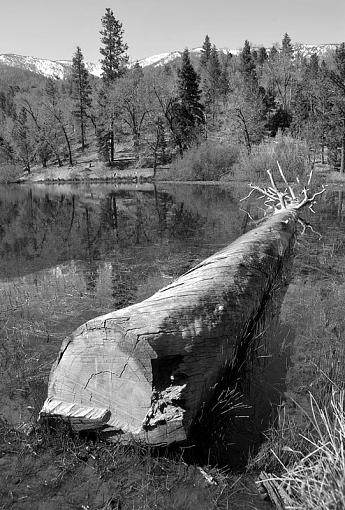 Downed Tree-dsc_1954_bw_800.jpg