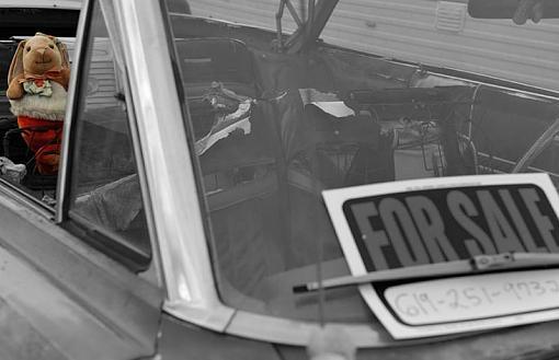 Back Seat Driver-dsc_8129_spot_800.jpg