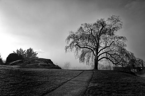 The Tree-tree-15.jpg