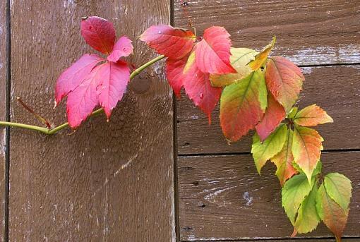 garden shed invaded-slpict6390.jpg