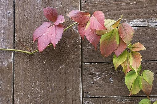 garden shed invaded-spict6390.jpg