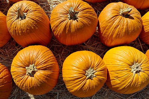 At a pumpkin patch-dsc_1099_1000.jpg