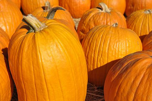 At a pumpkin patch-dsc_1096_edit1_1000.jpg