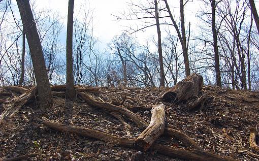Trees & Logs-blackwell-forest-preserve.jpg