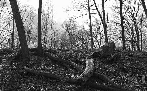 Broken Trees-blackwell-forest-preserve-b-w.jpg