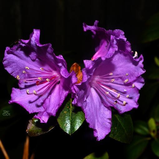 Second Post (DMG) Flowers-butterfly-flower.jpg