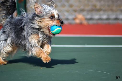 Sixth Post (DMG) My Dog-nenawball.jpg