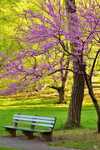 Seventh Post (DMG) @ the Arboretum-dsc_0061-2-.jpg