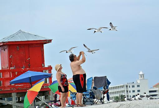 What do YOU think?-gulls.jpg
