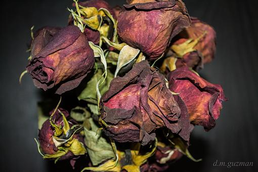 Withering Roses-dead-roses-1-2-.jpg