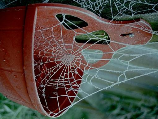 frosty spider's web-spiders-web30012b.jpg
