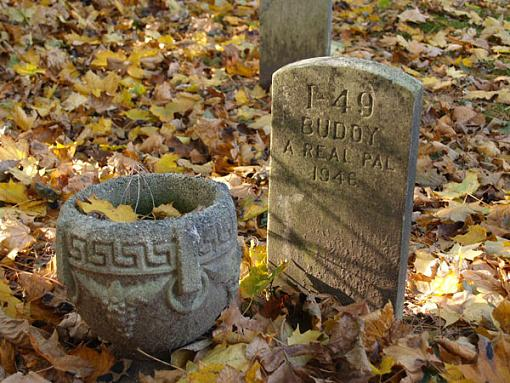 ...November Photo Project: The Cemetery...-buddy-real-pal-8-.jpg