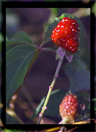 April Photo Project: RED-red-berries-640.jpg