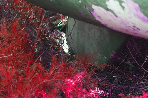 April Photo Project: RED-red-grass-640.jpg