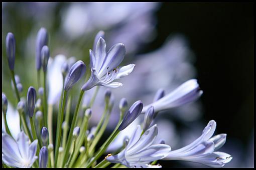 June Photo Project: Plantlife-img_5674_w640.jpg