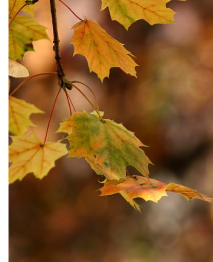 November Photo Project: Old-leaves.jpg.jpg