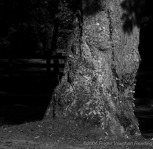 November Photo Project: Old-_rw_6001-1-640.jpg