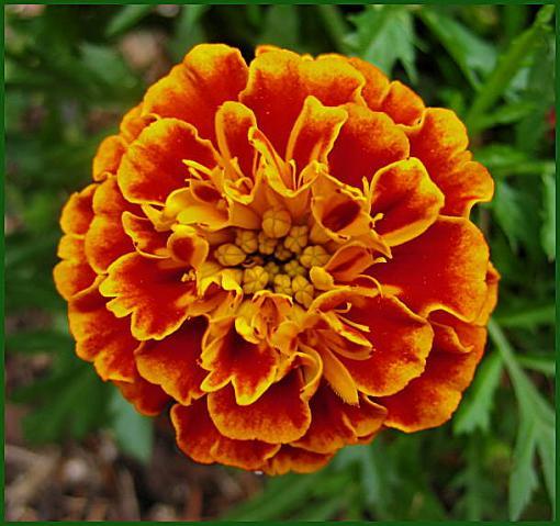 May Photo Project: May Flowers-orangeflower2.jpg