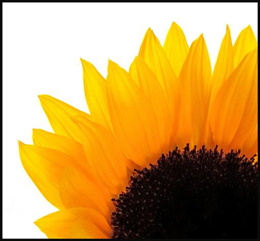 June Photo Project: Window light-sunflower-jpg.jpg