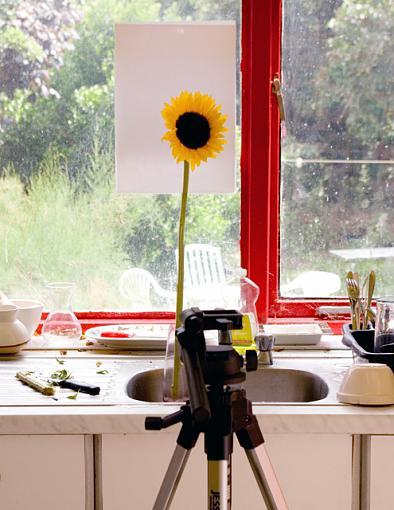 June Photo Project: Window light-setup.jpg