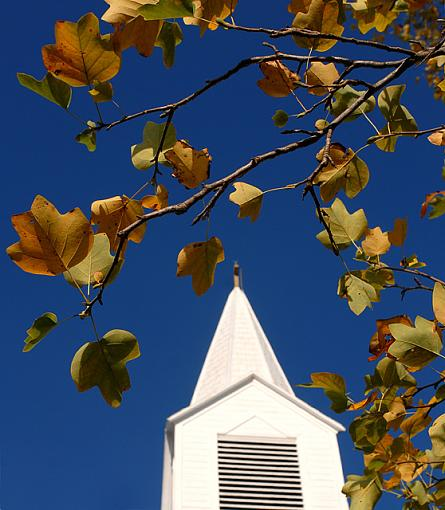 October Photo Project: Look Up-dsc_8941-2-640.jpg