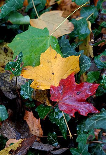November Photo Project: Autumn Colours-dsc_8616-2-640.jpg