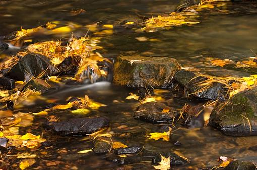 November Photo Project: Autumn Colours-fall-creek.jpg