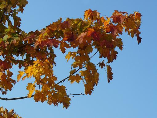 November Photo Project: Autumn Colours-p1070459.jpg