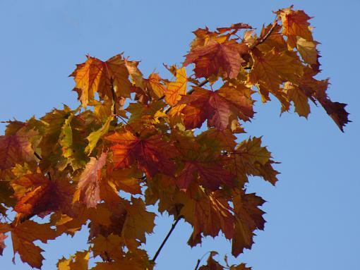 November Photo Project: Autumn Colours-p1070443.jpg