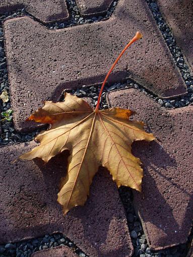 November Photo Project: Autumn Colours-p1070460.jpg