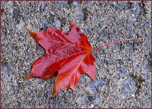 November Photo Project: Autumn Colours-dsc_8584-2-b-640.jpg