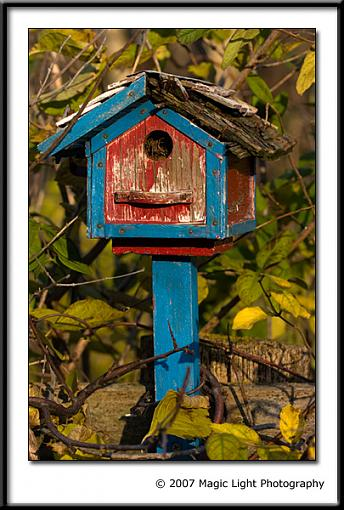November Photo Project: Autumn Colours-crw_2552.jpg