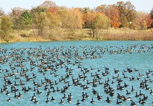 November Photo Project: Autumn Colours-fdl-park.jpg