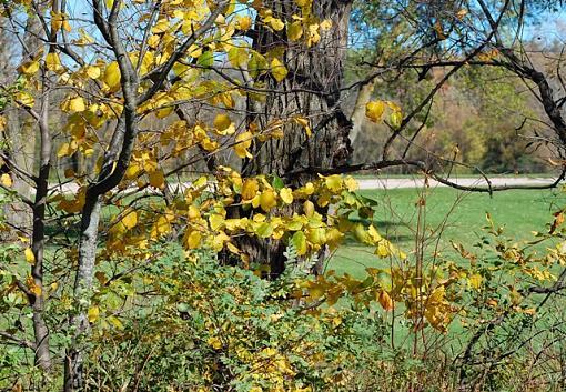 November Photo Project: Autumn Colours-horicon-golf-course.jpg