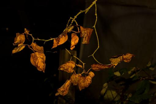 November Photo Project: Autumn Colours-not-all-leaves-pretty.jpg